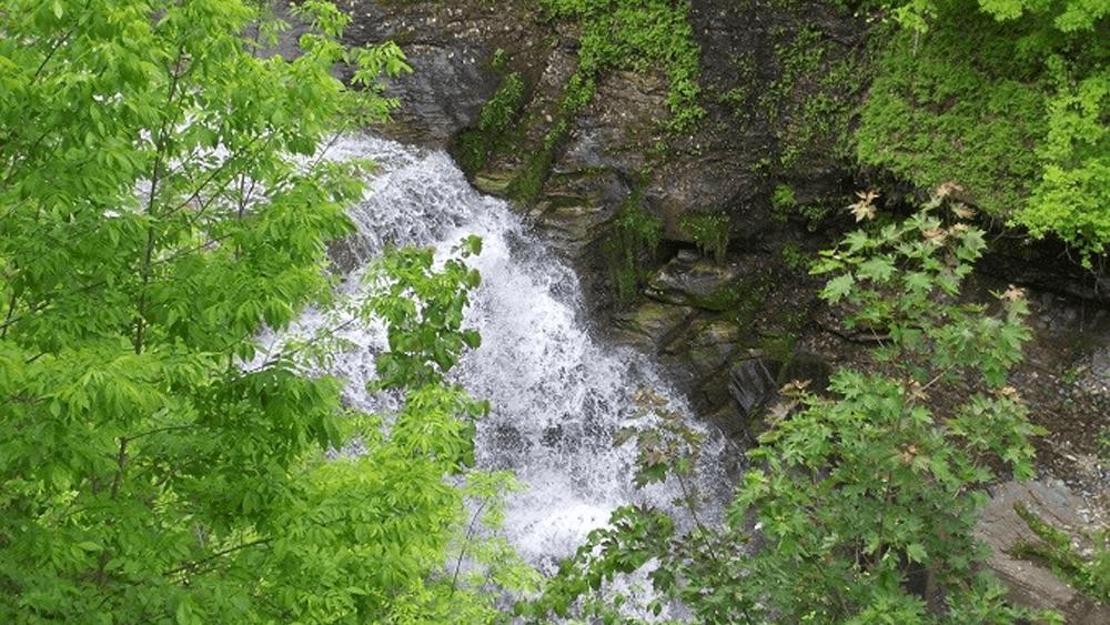 Wintergreen Park